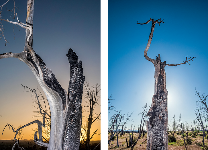 Two photographs of trees